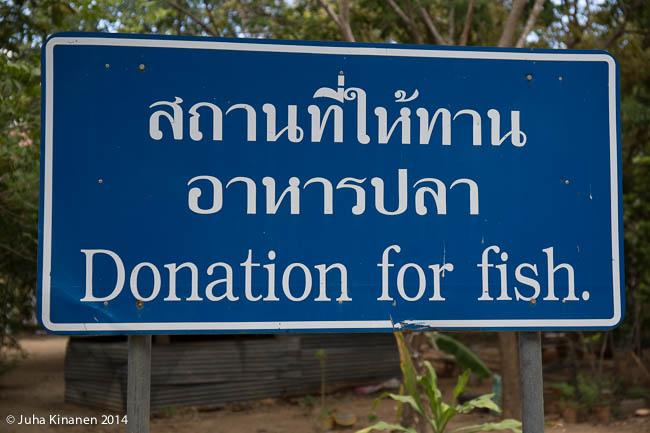 Wat Bor Faissa voi käydä syöttämässä kissakaloja