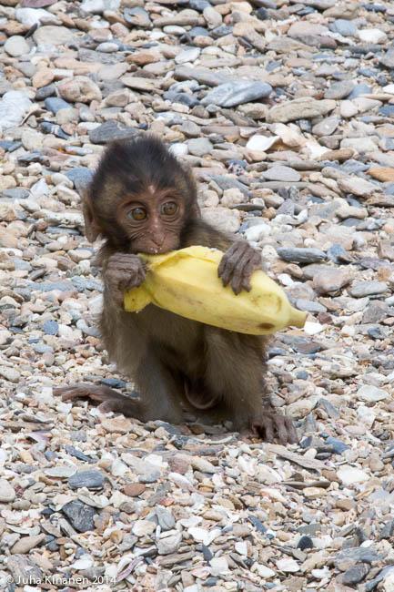 Pienikin sai banani