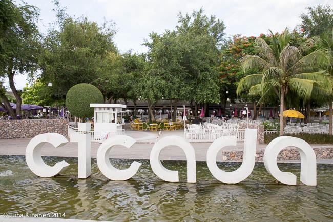 Cicada -taiteilijayhteisön markkinat viikonloppuisin