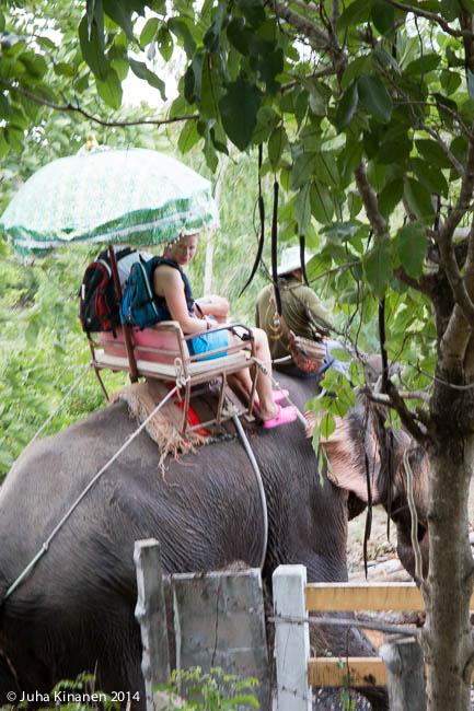 Taas norsun selässä